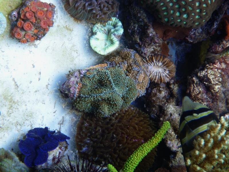 Navarchus Reef Tank Evolution - Page 6 P1000311