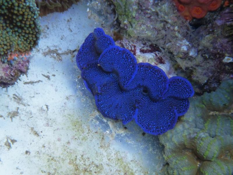 Navarchus Reef Tank Evolution - Page 6 P1000329