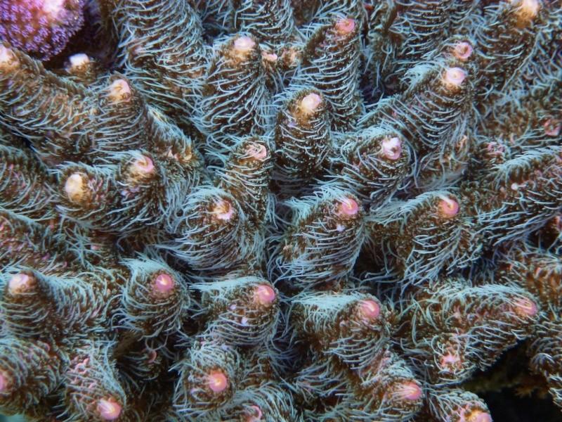 Navarchus Reef Tank Evolution - Page 6 P1000333