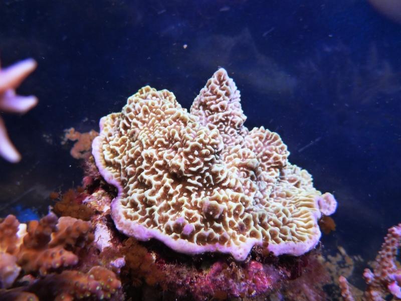 Navarchus Reef Tank Evolution - Page 6 P1000911