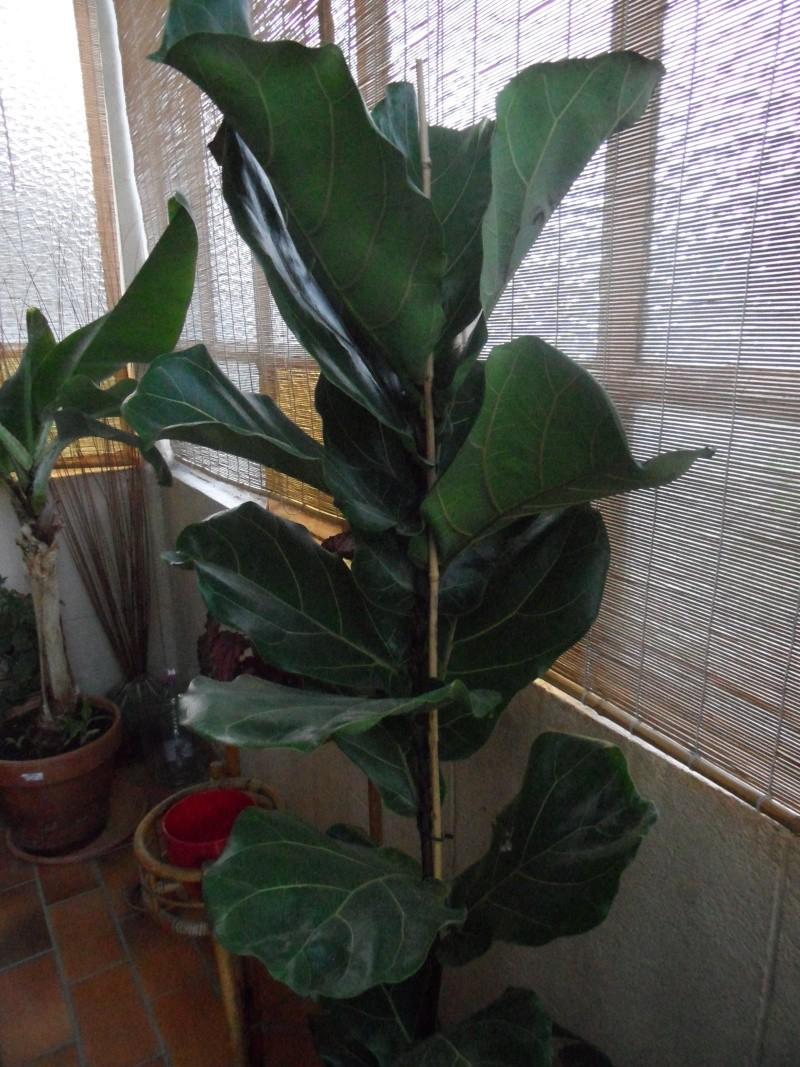 Mes plantes interieur ... 00115
