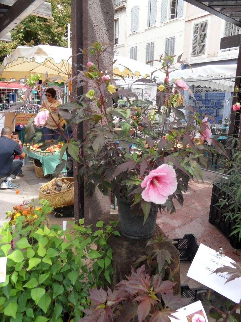 Journées des plantes au Cours Julien 00216