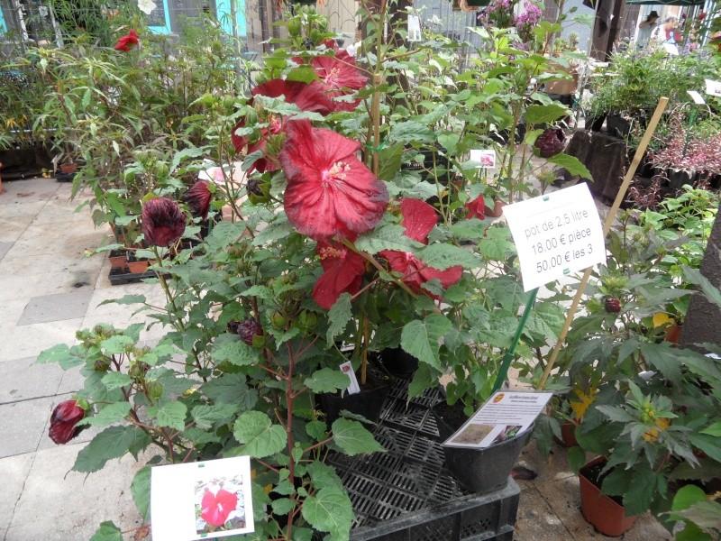 Journées des plantes au Cours Julien 00316