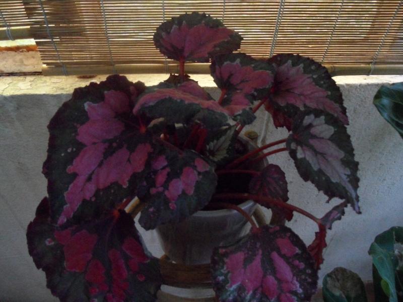 Identification plantes intérieur 00416