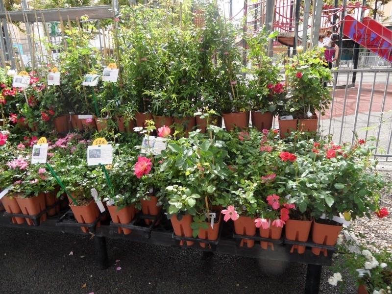 Journées des plantes au Cours Julien 00513