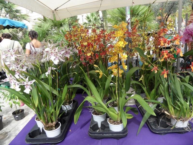 Journées des plantes au Cours Julien 00612