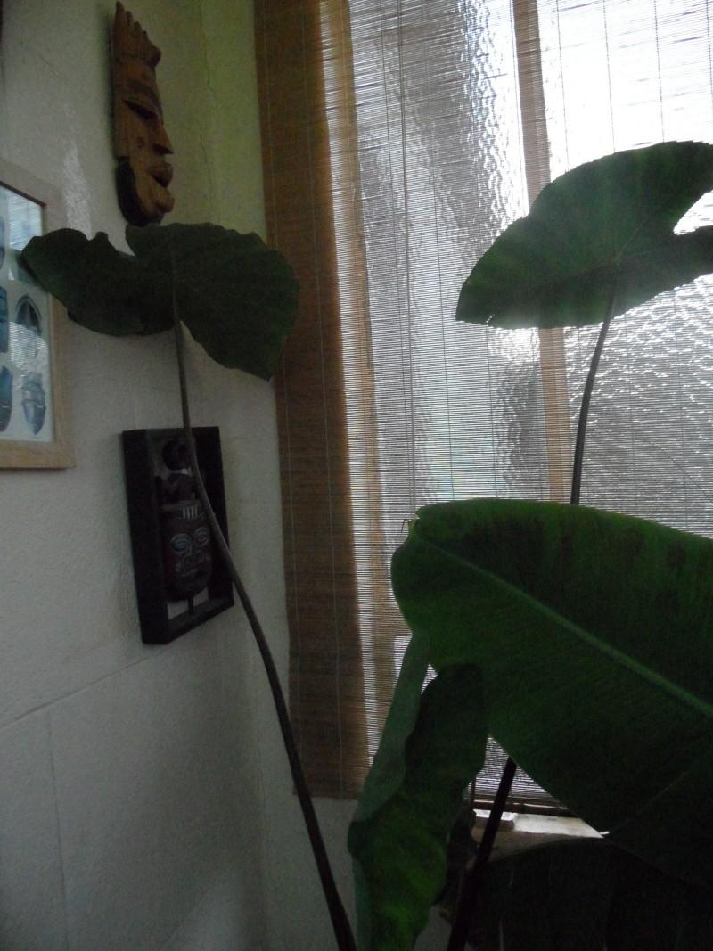 Mes plantes interieur ... 00615