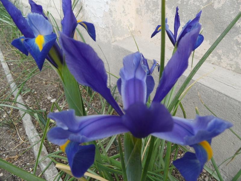 Iris 2012 00626