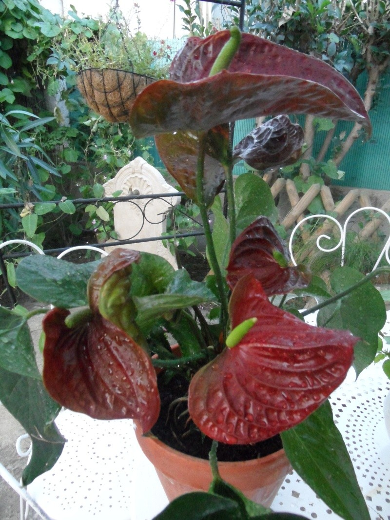 Mes plantes interieur ... 00714