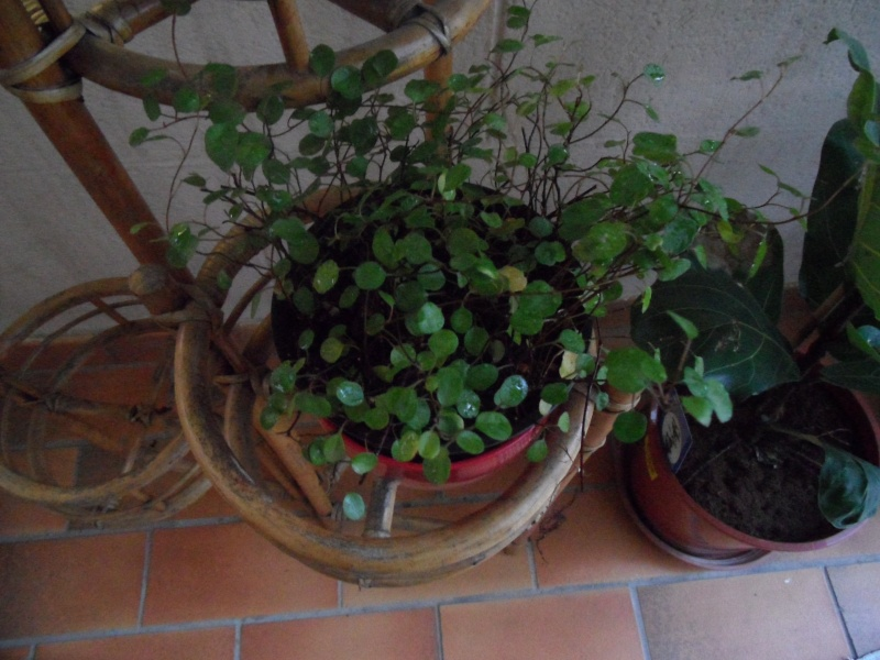 Identification plantes intérieur 00815
