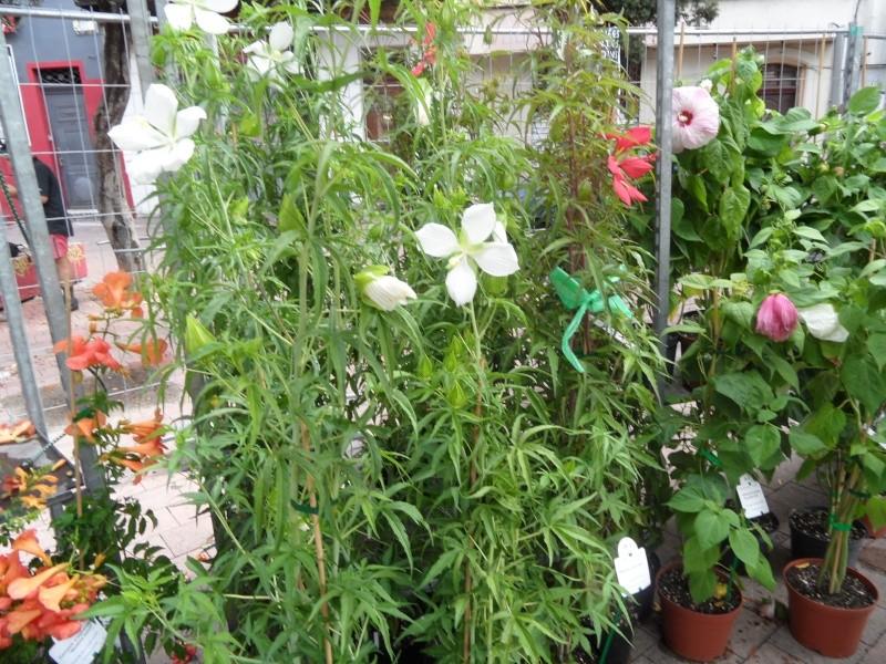 Journées des plantes au Cours Julien 00911