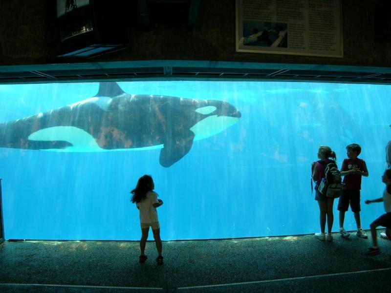 [Photos] Orques aux vitres 2004-510