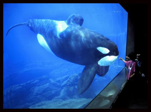 [Photos] Orques aux vitres 32863510