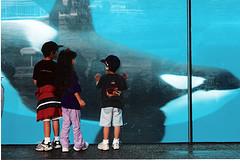 [Photos] Orques aux vitres 98138610