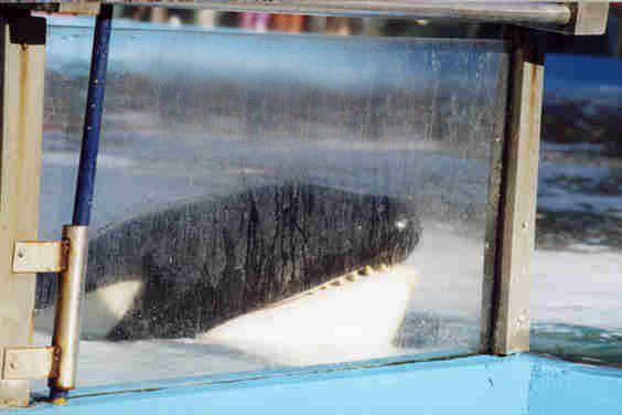 [Photos] Orques aux vitres Captiv11