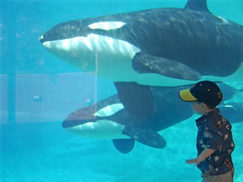 [Photos] Orques aux vitres Killer21