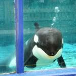 [Photos] Orques aux vitres Morgan10