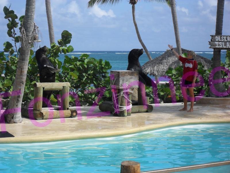 Dauphin de la république dominicaine Otarie13