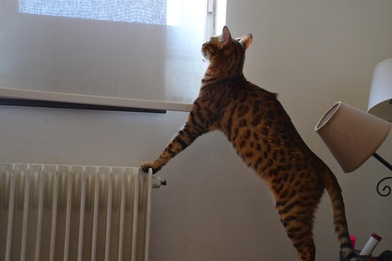 Leopardcats Lady Bump (Une jolie surprise ...)  - Page 13 02410