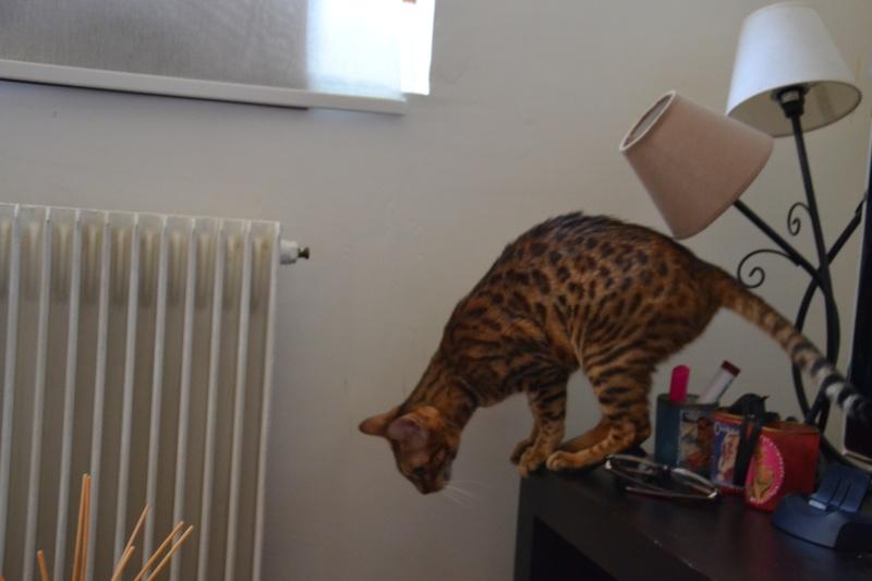 Leopardcats Lady Bump (Une jolie surprise ...)  - Page 13 02510