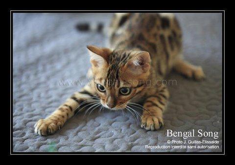Bengal Song G'Eywa Eytukan, nouvel amour de Cassidy 111110