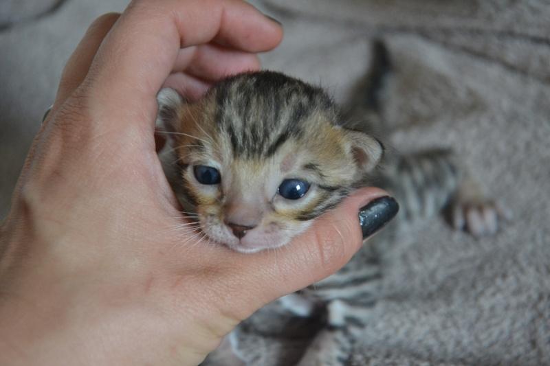 Les petits H de Leopardcats Lady Bump - Page 9 17_day10