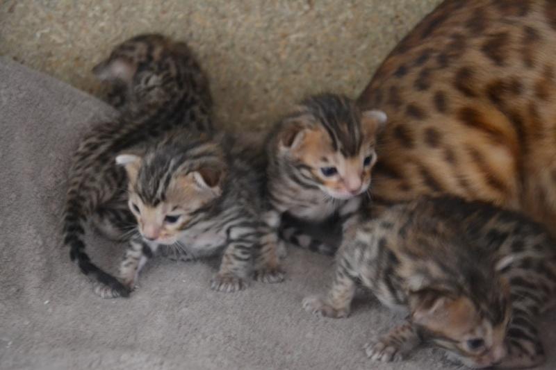 Les petits H de Leopardcats Lady Bump - Page 9 17_day21