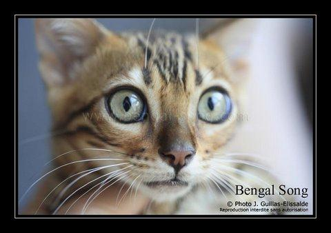 Bengal Song G'Eywa Eytukan, nouvel amour de Cassidy 20110910