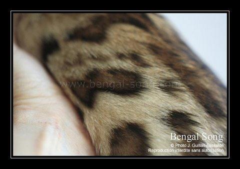 Bengal Song G'Eywa Eytukan, nouvel amour de Cassidy 20110912