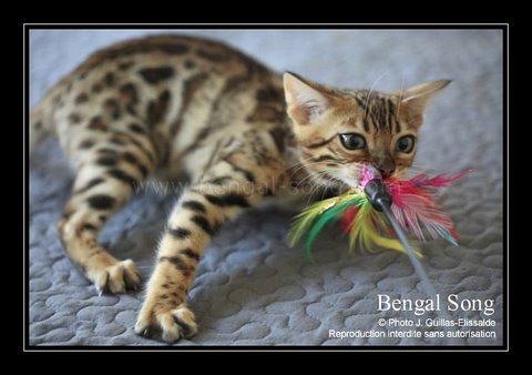 Bengal Song G'Eywa Eytukan, nouvel amour de Cassidy 20110913