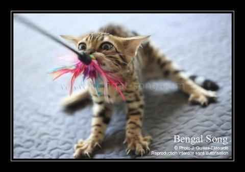Bengal Song G'Eywa Eytukan, nouvel amour de Cassidy 20110915