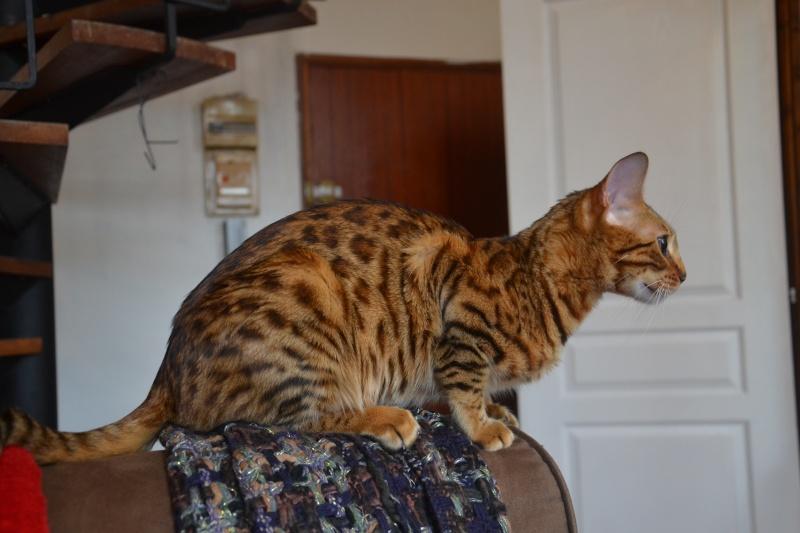 Leopardcats Lady Bump (Une jolie surprise ...)  - Page 12 26_05_17