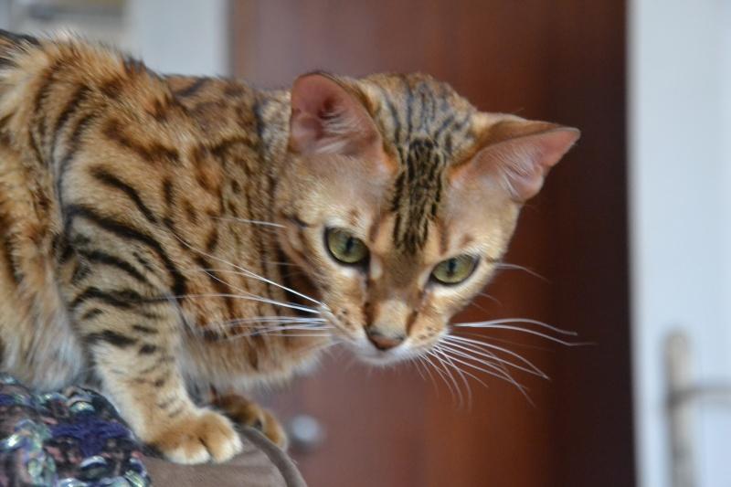 Leopardcats Lady Bump (Une jolie surprise ...)  - Page 12 26_05_18