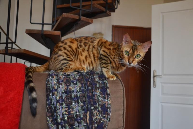 Leopardcats Lady Bump (Une jolie surprise ...)  - Page 12 26_05_19