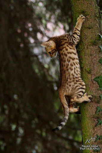 Leopardcats Lady Bump (Une jolie surprise ...)  - Page 2 29812610