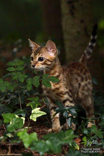 Leopardcats Lady Bump (Une jolie surprise ...)  - Page 2 29871810