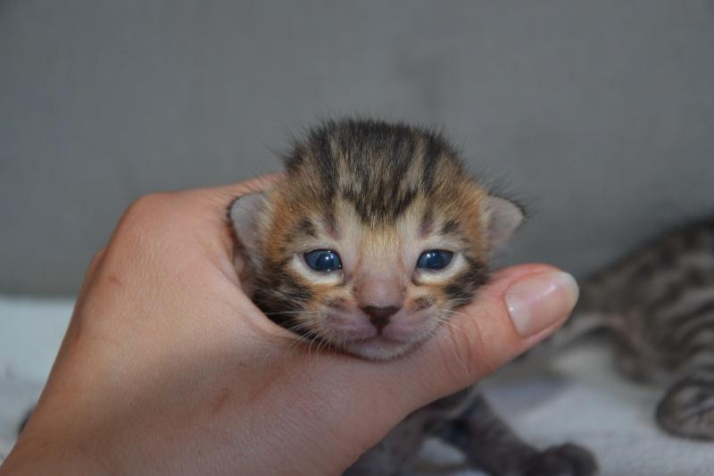 Les petits H de Leopardcats Lady Bump - Page 9 2_week10