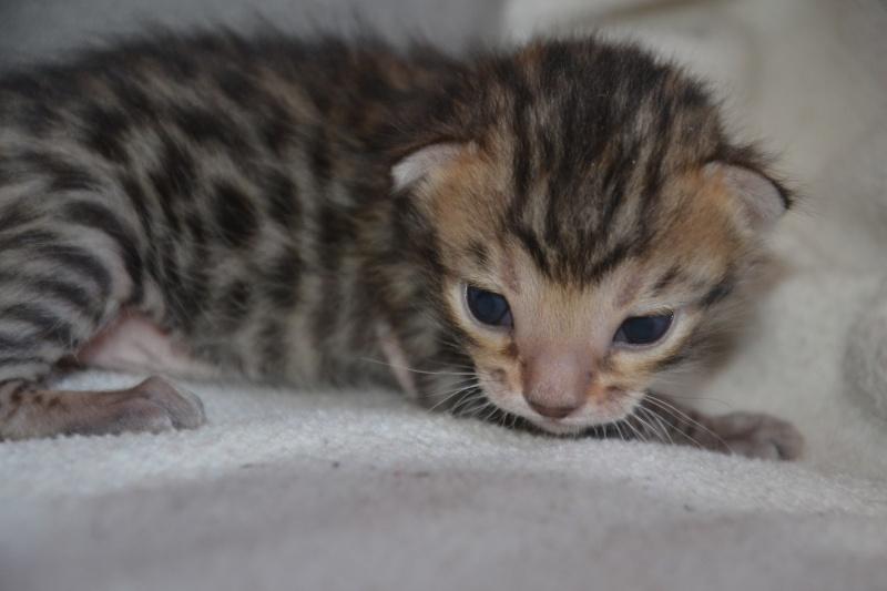 Les petits H de Leopardcats Lady Bump - Page 9 2_week11