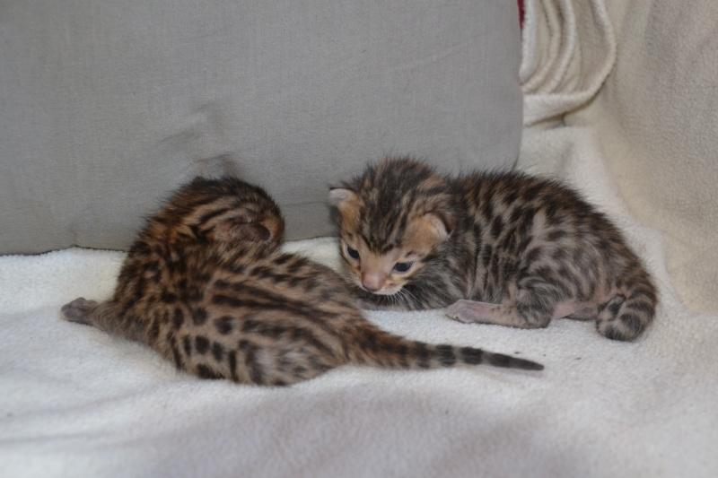 Les petits H de Leopardcats Lady Bump - Page 9 2_week12