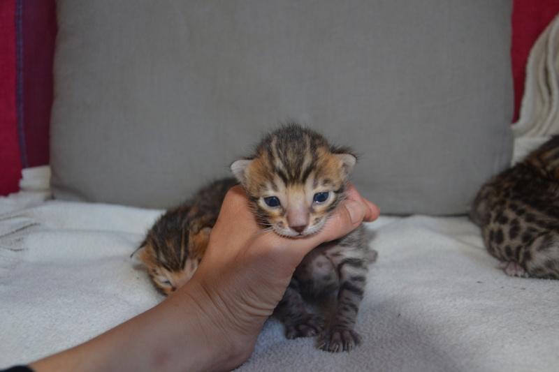 Les petits H de Leopardcats Lady Bump - Page 9 2_week13