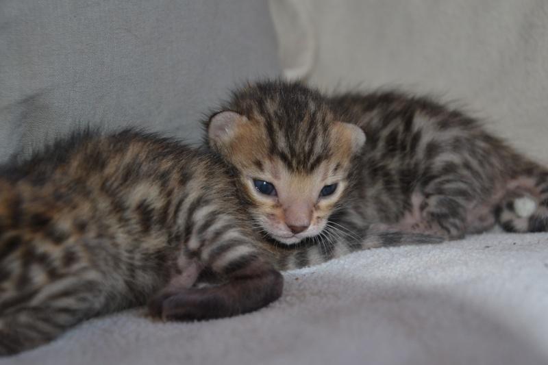 Les petits H de Leopardcats Lady Bump - Page 9 2_week16