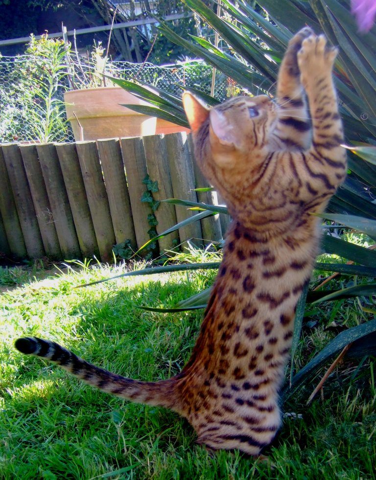 Leopardcats Lady Bump (Une jolie surprise ...)  Beule116