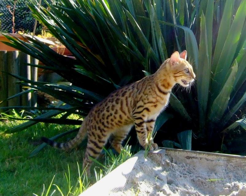 Leopardcats Lady Bump (Une jolie surprise ...)  Beule118