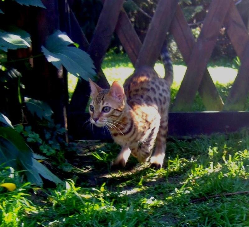 Leopardcats Lady Bump (Une jolie surprise ...)  Beule119