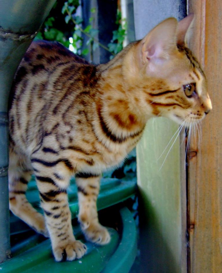 Leopardcats Lady Bump (Une jolie surprise ...)  Beule122