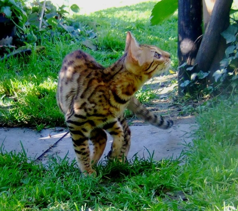 Leopardcats Lady Bump (Une jolie surprise ...)  Beule124