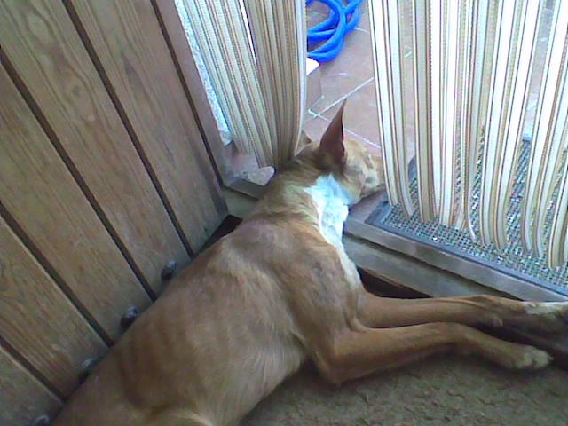 Dog in Galera - Page 3 Dogcoo10