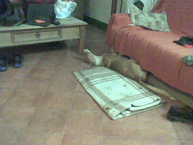 Dog in Galera - Page 3 Dogsof10