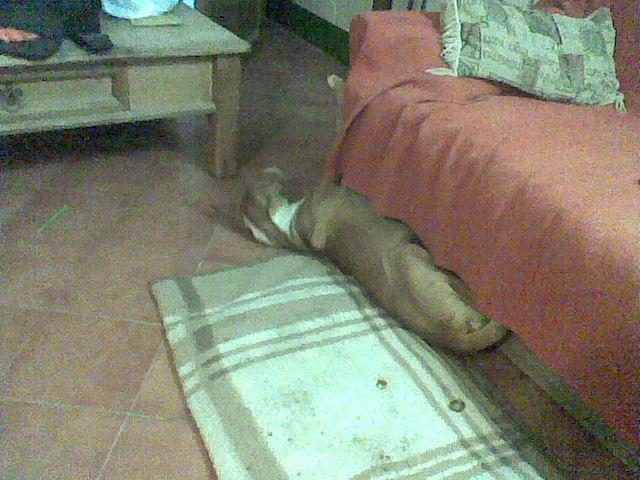 Dog in Galera - Page 3 Dogsof11