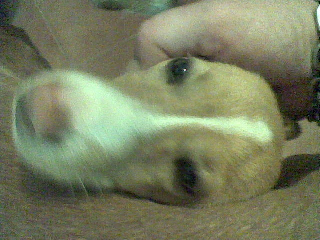 Two lovely dogs need home. Puppy110